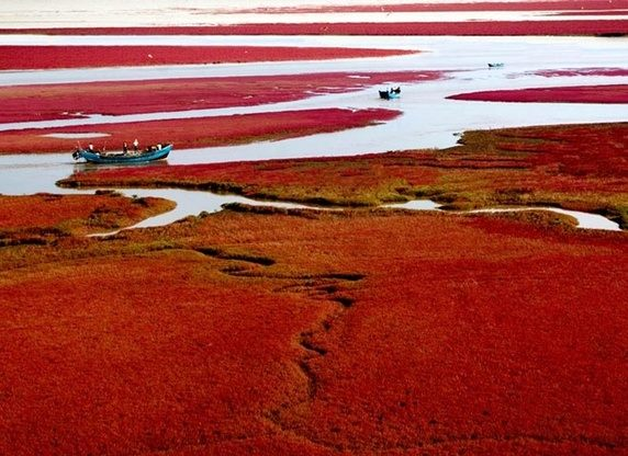 Red Beach Panjin in China