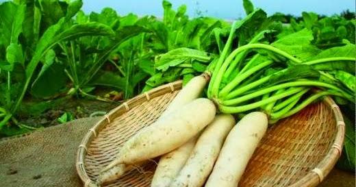高雄岡山 . 劉記魚丸: 【食材】冬季盛產蔬菜(ㄧ)白蘿蔔與紅蘿蔔