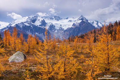 Mt. MacBeth above fall larches in Monica Meadows, Purcell Range, British Columbia, Canada.