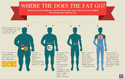 Where Does My Fat Go After I Lose Weight?