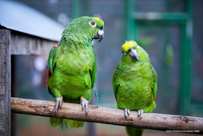 Bosque dos Papagaios: proteção e amor à natureza