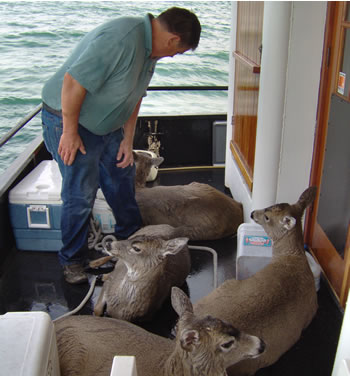 Tom Satre and the rescued deer