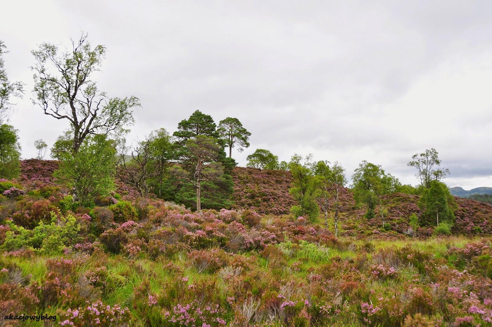 Szkocja - w dolinie Glen Affric.