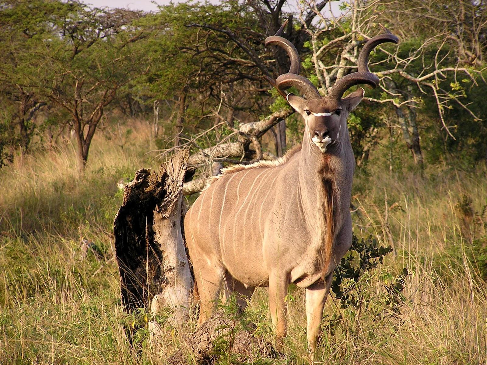 Fall Baby Animal Wallpaper Kudu