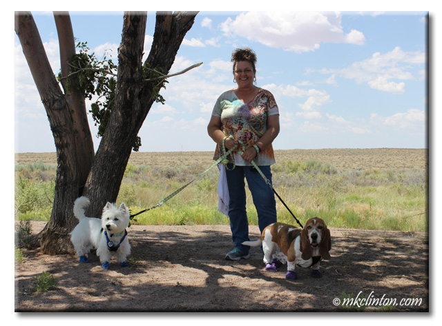 On the road in Arizona with Bentley Basset Hound and Pierre Westie