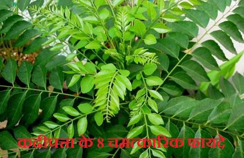 कढीपत्ता के 8 चमत्कारिक फायदे, Health Benefits Kadhi Patta