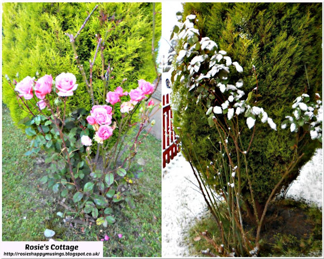 The Picture Perfect Project January Summer & Winter Roses