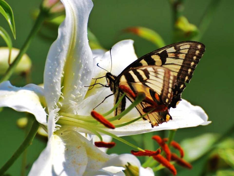 Fotografias De Mariposas Y Flores: Fotografias De Mariposas Y Flores