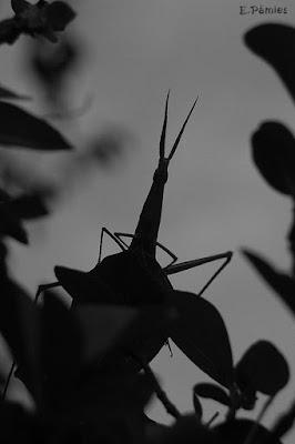 Insecto palo a contraluz