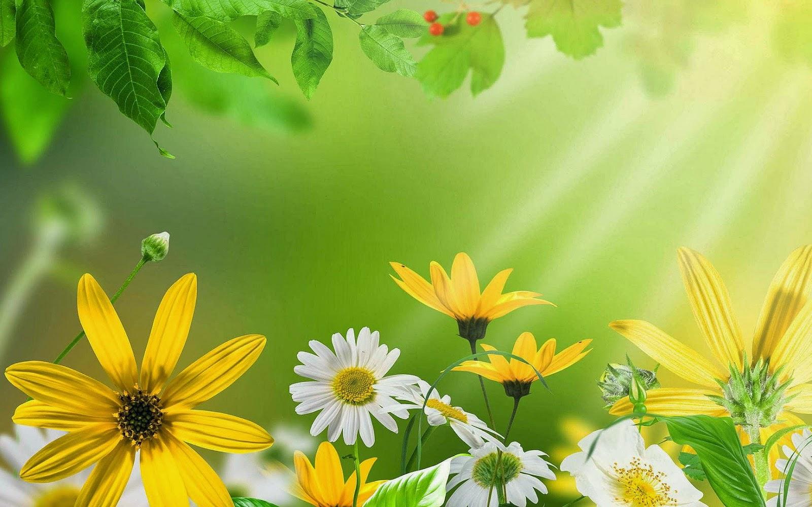 Witte en gele bloemen in de zomer
