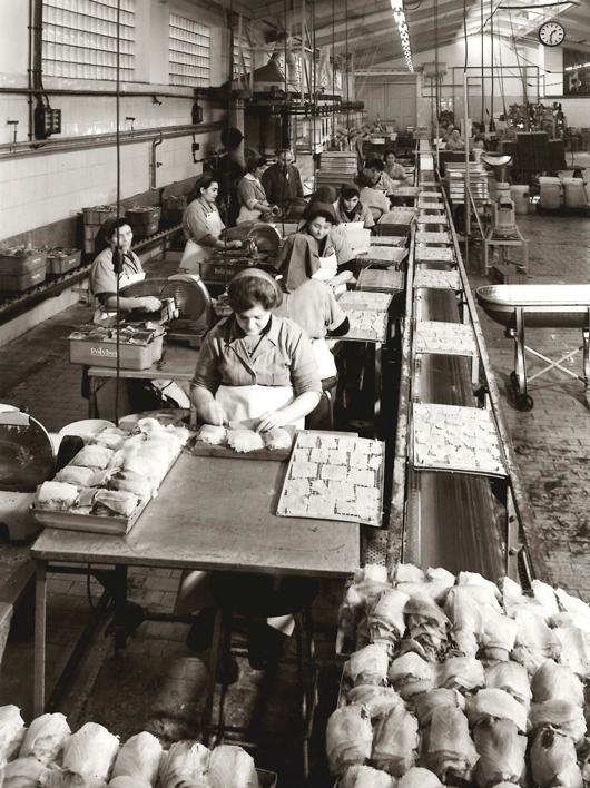 Feinfisch Manufactur Friedrichs - damals wie heute