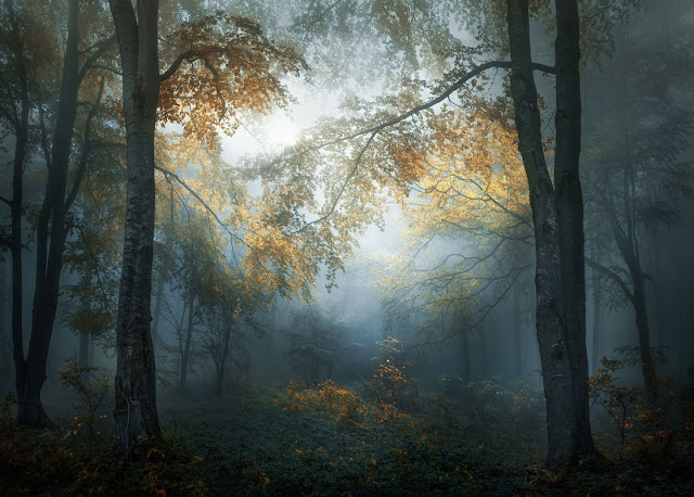 National Park - Central Balkan, Bulgaria. Copyright: © Veselin Atanasov, Bulgaria, Open Photographer of the Year, Open, Landscape & Nature (2018 Open competition), 2018 Sony World Photography Awards
