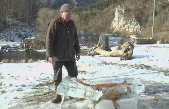 Un zorro cae a un río y se convierte en cubo de hielo