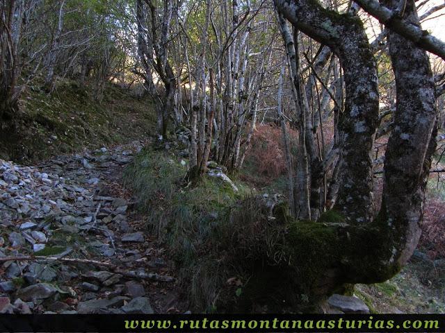 Senda del Cartero, Peña Salón y Sedo Vibolines: Bosque