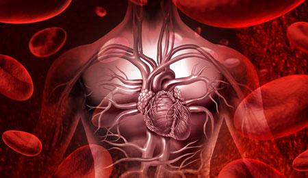 هل النزف من مختلف أنواع الأوعية الدموية متساو؟