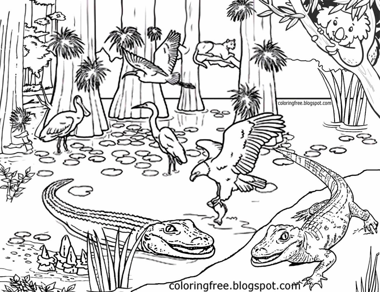Australias Magical Rainforest Complex Picture Australian Coloring Pages For Teenagers Difficult Art