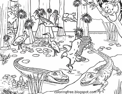 Australia's magical rainforest complex picture Australian coloring pages for teenagers difficult art