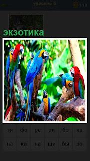 Много разноцветных попугаев, настоящая экзотика в лесу