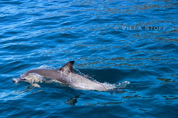 Bruny Island, Tasmanien / Weltreise mit Kind / Reiseblog