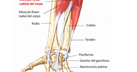 Cubital tratamiento tendinitis posterior
