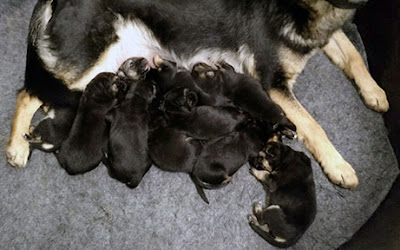 Greta and her new litter