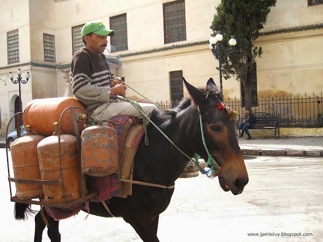 Transportation, Donkey, Fez, Morocco