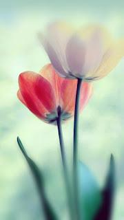 flores-de-color-rojo-y-blanco