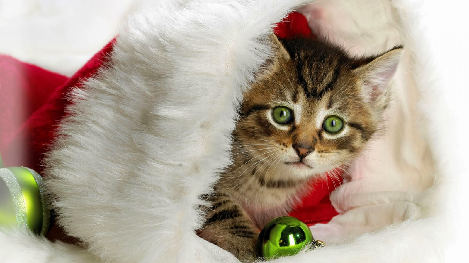 Cute Christmas Wallpapers: Cute Cats Christmas HD Wallpapers