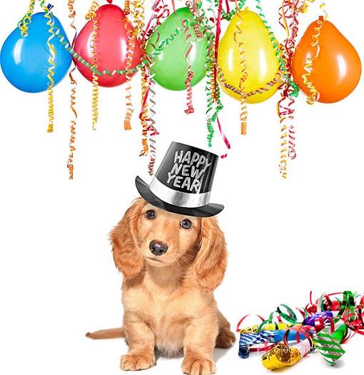 cachorro-com-chapeu-escrito-happy-new-years-e-baloes-de-festa