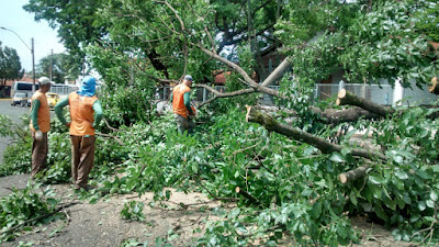 Barretos atende mais de 20 ocorrências de queda de árvore após temporal