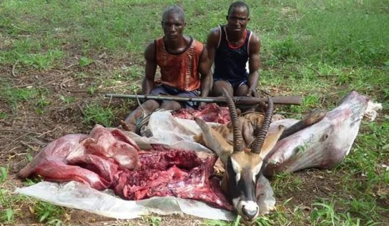 photo: Poachers arrested for killing a female antelope in Yankari Game Reserve