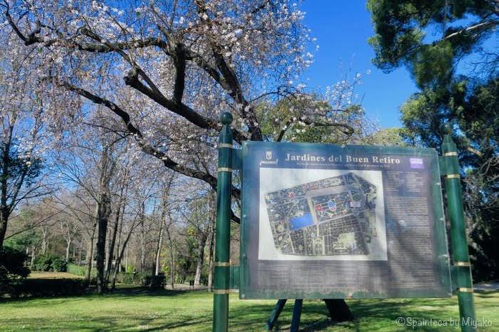 スペインのマドリードのレティーロ公園でピンクの花をつけた木