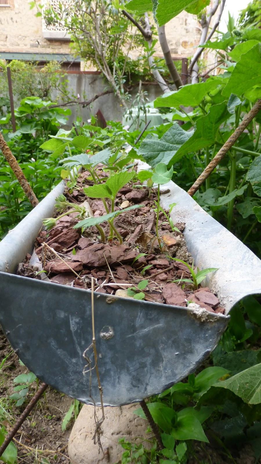 Les balades de Lison: Mon jardin, ce matin...
