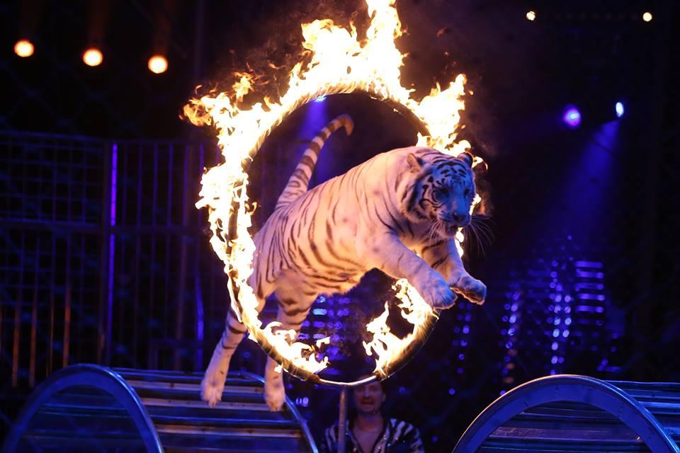 circo x sempre festival du cirque de monte carlo il 1 176 spettacolo