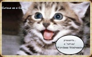 http://curiousasacathy.com