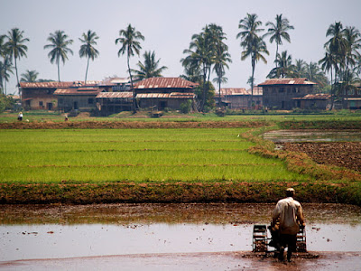 Myanmar. Farming around the Inle Lake