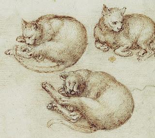 dessin leonard de vinci, chat