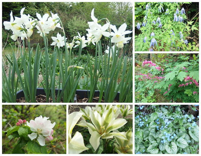Six flowers which are looking good in my garden during 2017's National Gardening Week