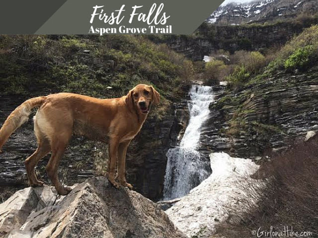 The Best Dog Friendly Waterfalls Hikes in Utah, First Falls Aspen Grove Trail