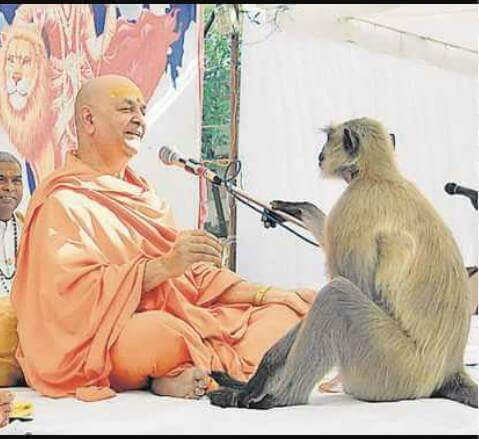 ram-katha-joined-by-a-monkey-राम कथा में शामिल हुआ वानर, कथा वाचक को दिया आशीर्वाद