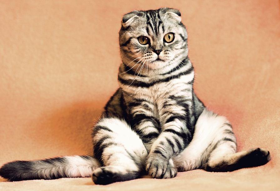 7 Tips Memotong Kuku Kucing yang baik dan Benar