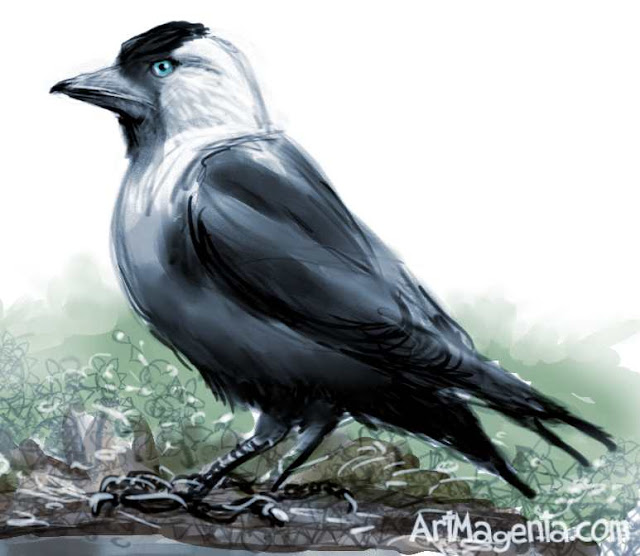 Jackdaw sketch painting. Bird art drawing by illustrator Artmagenta