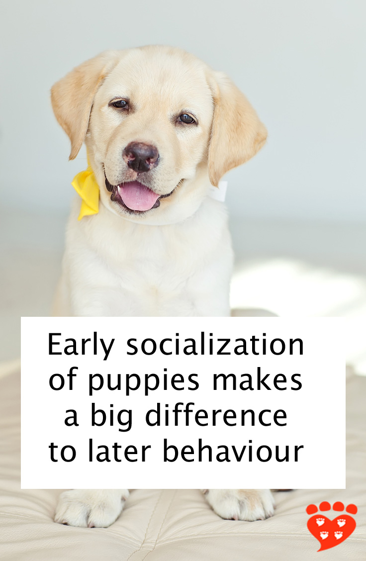panion Animal Psychology Extra Early Socialization for Puppies