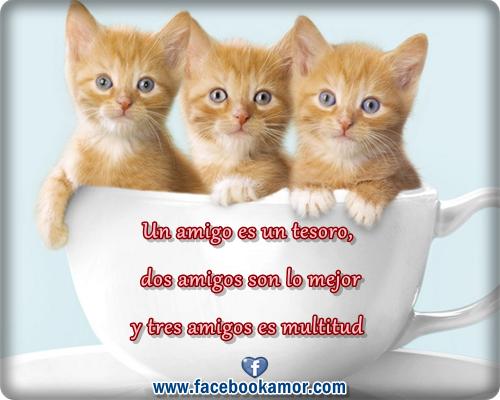 Lindos Gatitos Para Facebook Imágenes Bonitas De Amor Frases