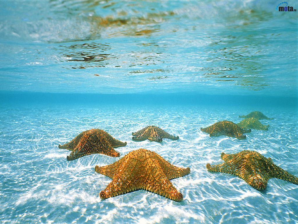 Fondos De Pantalla Del Mar: FONDOS COPADOS: Fondo De Pantalla De Estrellas De Mar