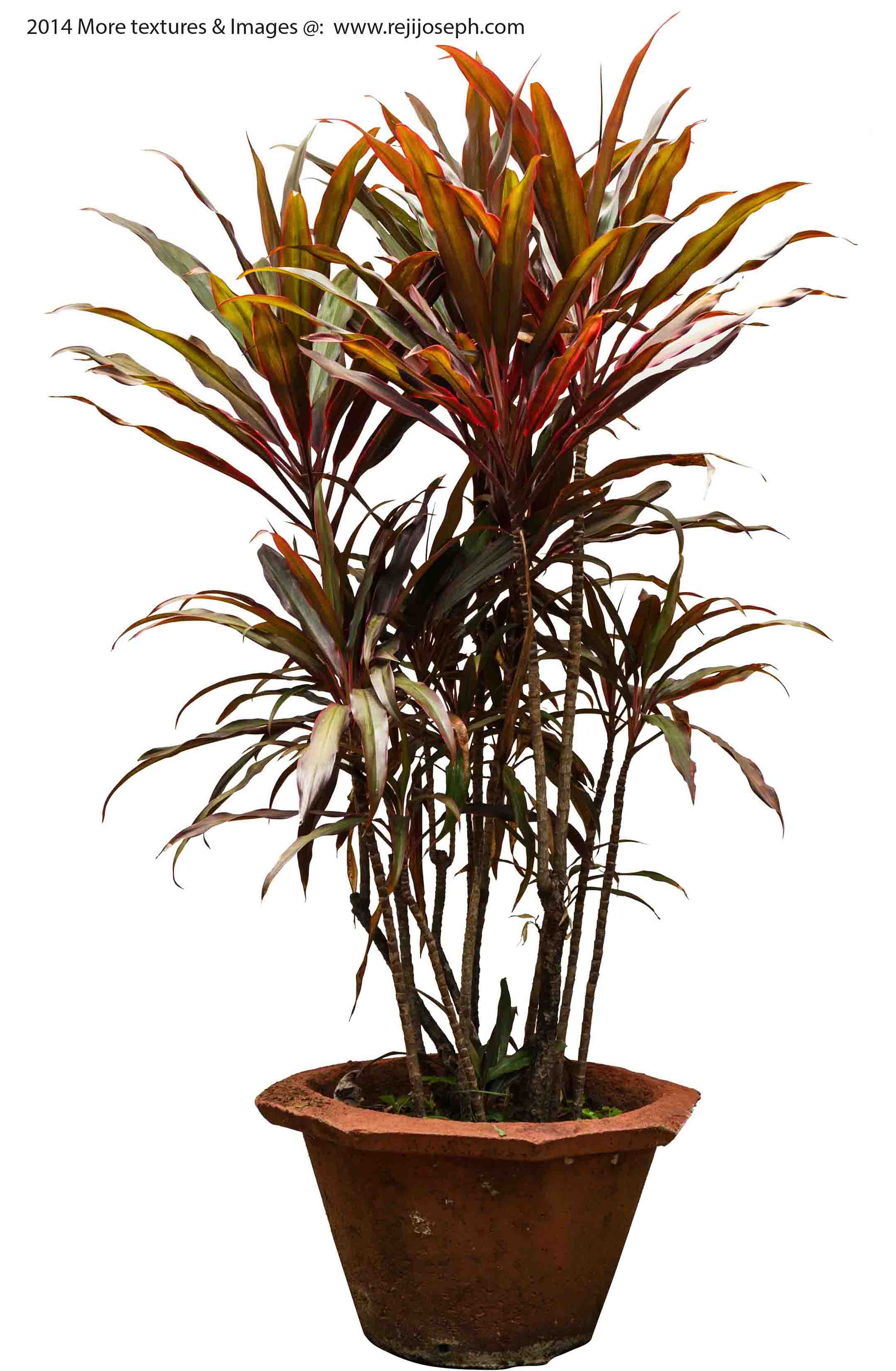 Garden Plant texture 00011
