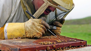Οι επιστήμονες ανακαλύψαν τι σκοτώνει τις μέλισσες και είναι χειρότερο από ό, τι νομίζαμε!