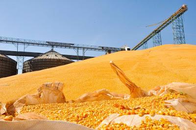 Tabela de frete faz indústria importar milho argentino