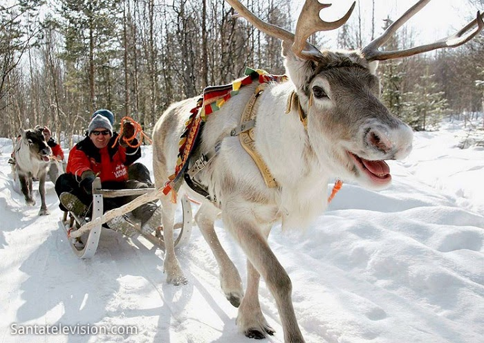 Play with some reindeer…