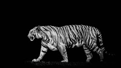 Tiger Out of the Dark Creative Commons